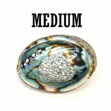 medium ABALONE MUSCHEL